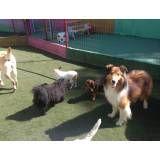 Serviços de hotelzinho para cães no Brooklin
