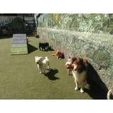 Serviços de hotelzinho para cão  no Jabaquara