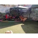 Um Hotel bom para cachorro em Sumaré