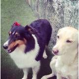Valor adestrador para cão no Sacomã