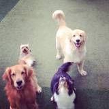 Valor adestradores para cachorro em Raposo Tavares