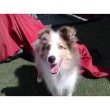 Valor de adestrador para cachorro em Jandira