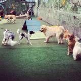 Valor de adestrador para cachorro em Taboão da Serra