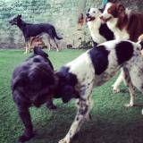 Valor de adestrador para cachorros na Cidade Dutra