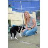 Valor de adestrador para cães em Santo Amaro