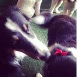 Valor de adestrador para cães no Butantã