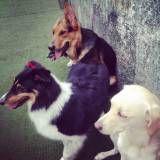 Valor de adestrador para cão na Lapa