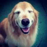 Valor de adestrador para cão na Vila Andrade