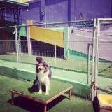 Valor de adestradores para cachorro em Sumaré