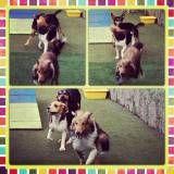 Valor de adestradores para cachorro na Vila Leopoldina
