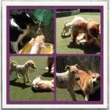 Valor de adestradores para cachorro na Vila Sônia