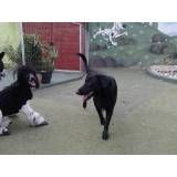 Valor de adestradores para cachorro no Campo Limpo