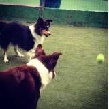 Valor de adestradores para cachorro no Jardim América