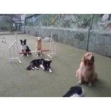 Valor de adestradores para cães no Ibirapuera