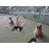 Valor de adestradores para cães no Rio Pequeno