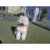 Valor de adestradores para cão em Barueri