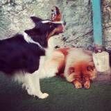 Valor de adestradores para cão na Lapa