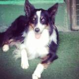 Valor de adestradores para cão no Butantã