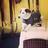 Valor de adestramento de cachorro no Jardim América