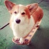 Valor de adestramento de cachorros no Ibirapuera