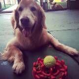Valor de adestramento de cães no Jardins