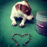 Valor de adestramento de cão no Ibirapuera