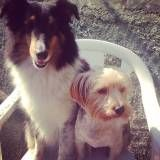 Valor de adestramento para cachorros na Pedreira