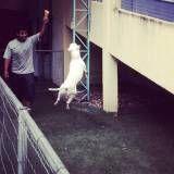 Valor de creche de cachorro em Embu Guaçú