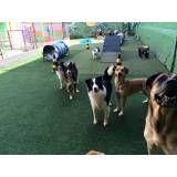Valor de creche de cachorros na Cidade Dutra