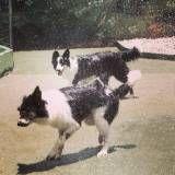 Valor de creche de cães no Jardim América