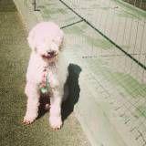 Valor de creche de cão na Pedreira