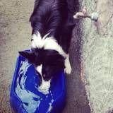 Valor de creche para cachorro no Morumbi