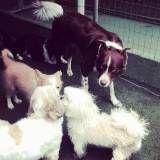 Valor de creche para cachorros no Brooklin