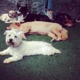 Valor de creche para cães no Jardim Bonfiglioli