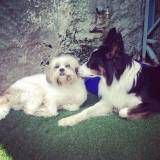 Valor de creches de cães em Pinheiros