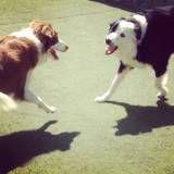 Valor de creches de cão  em Taboão da Serra