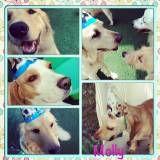 Valor de Daycare de cachorro na Vila Leopoldina