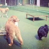 Valor de Daycare de cachorros em Jandira