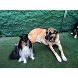 Valor de Daycare de cães na Água Branca