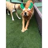 Valor de Daycare de cão  na Cidade Dutra