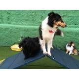 Valor de Daycare para cães no Ibirapuera