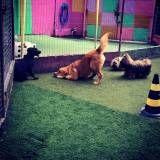 Valor de hospedagem para animais no Morumbi