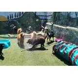 Valor de hospedagens animais na Vila Mariana