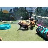 Valor de hospedagens de animais no Morumbi