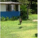 Valor de hotéis de cachorro em Interlagos