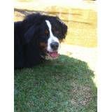 Valor de hotéis de cães no Alto de Pinheiros