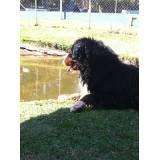 Valor de hotéis de cão em Santo Amaro