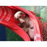 Valor de hotéis para cachorro em Taboão da Serra