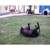 Valor de hotéis para cachorros no Jardim América