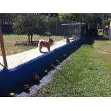Valor de hotéis para cães no Jabaquara